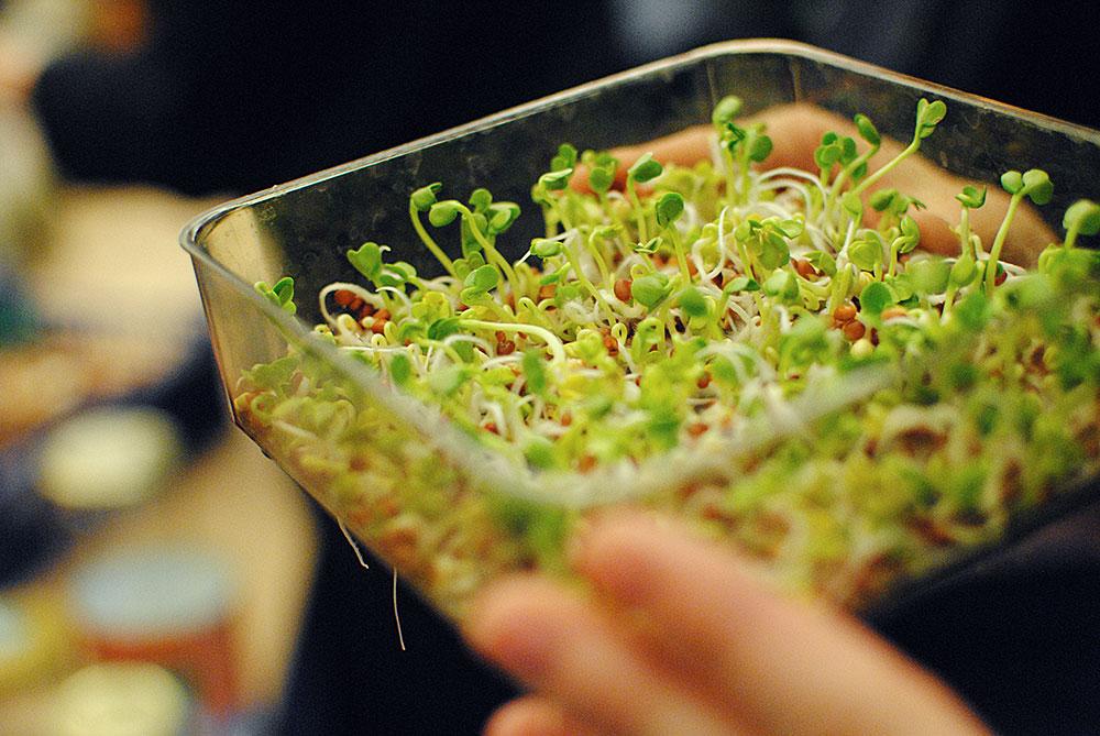 Radisespirer på 3. dagen. Er klar om 2 dage til en salat!