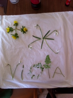 Violas blomster komposition til sunprint