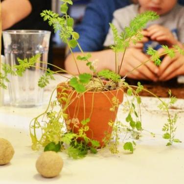 Frøbombe i potte