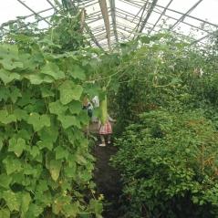 Plantemageren